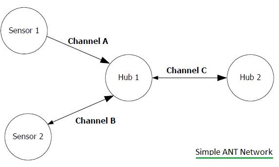 ANT-network