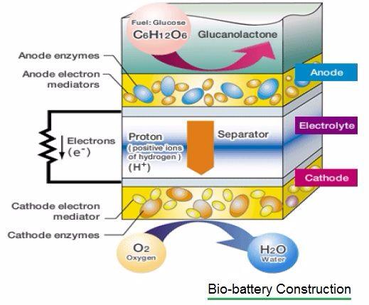 Bio battery construction