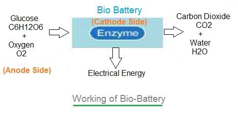 Bio battery working