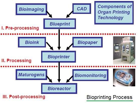 Bioprinting process followed by Bio-printer