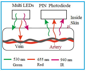 LEDs and Photodiodes for Heart Rate and SpO2 measurement