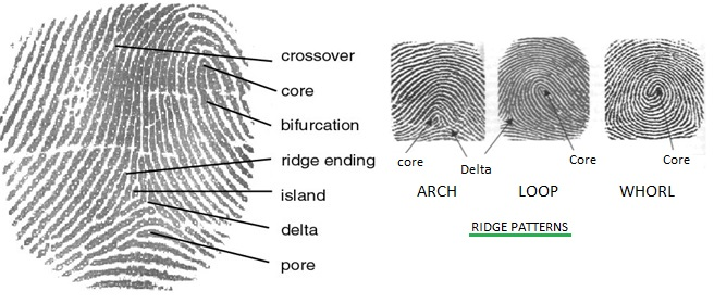 Biometric Technology Basics